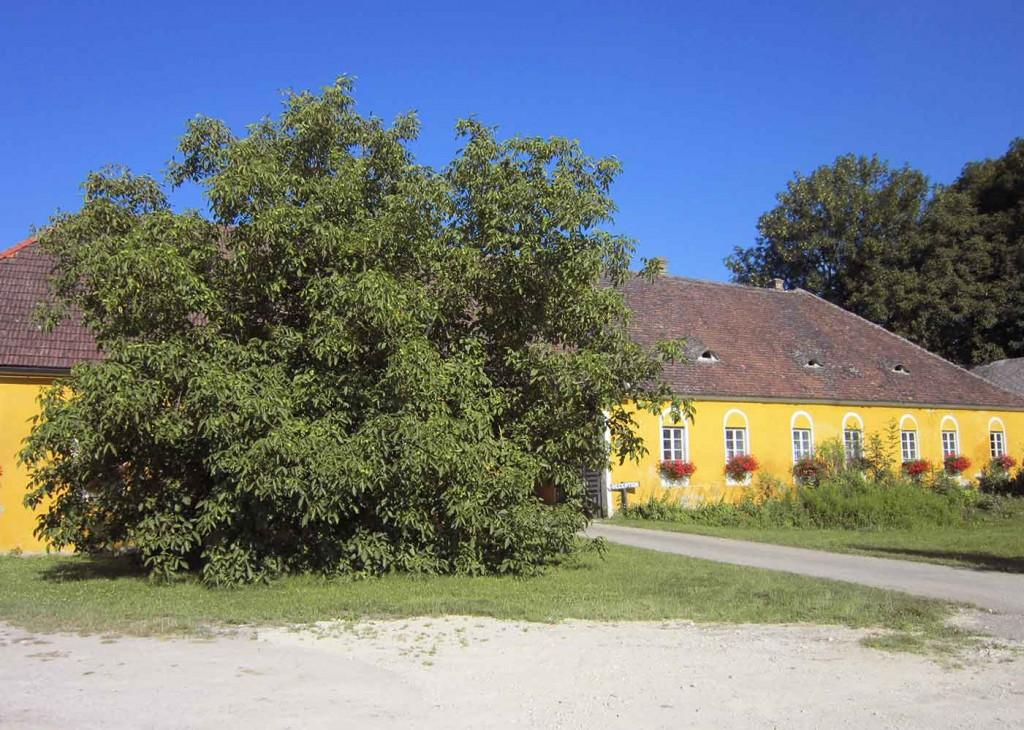 Finsterhof